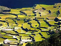 Philippines: Ricefields near Sagada/Mountain Province/Northern Luzon